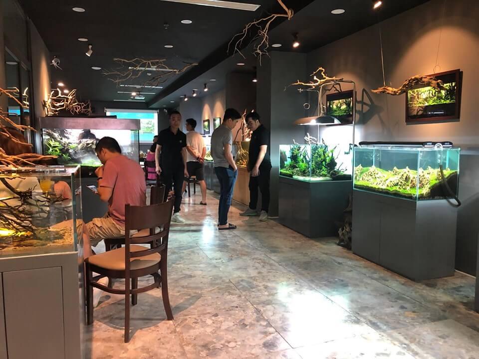 Bể cá thuỷ sinh trong trang trí quán cafe