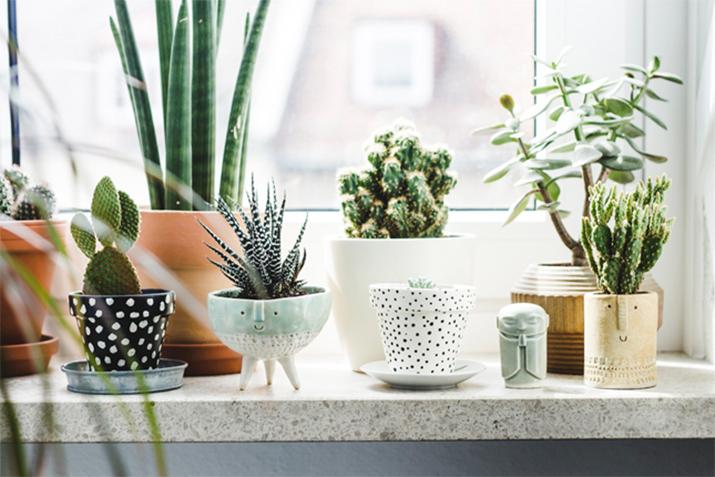 Đặt thêm các chậu cây xinh xắn trong nhà