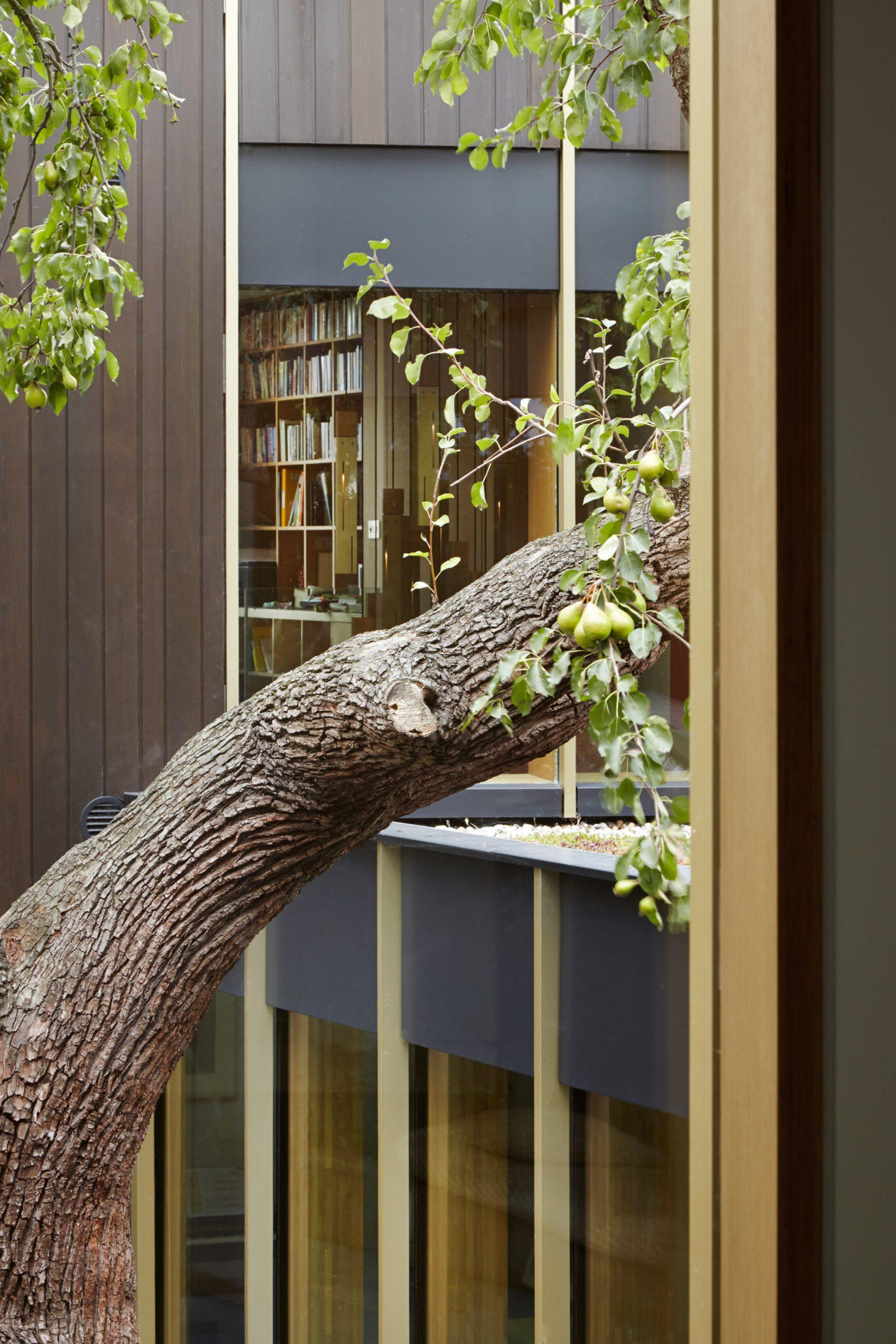 Cửa gỗ kính cường lực đẹp 2