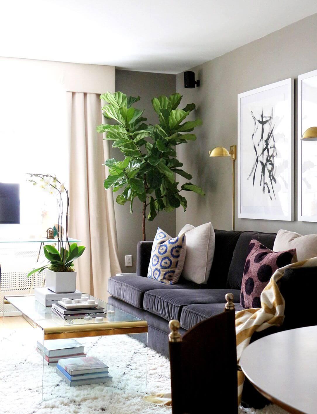 Tăng sức sống phòng khách bằng cây xanh